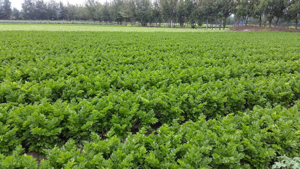 lahuerta-cultivos-ecuador